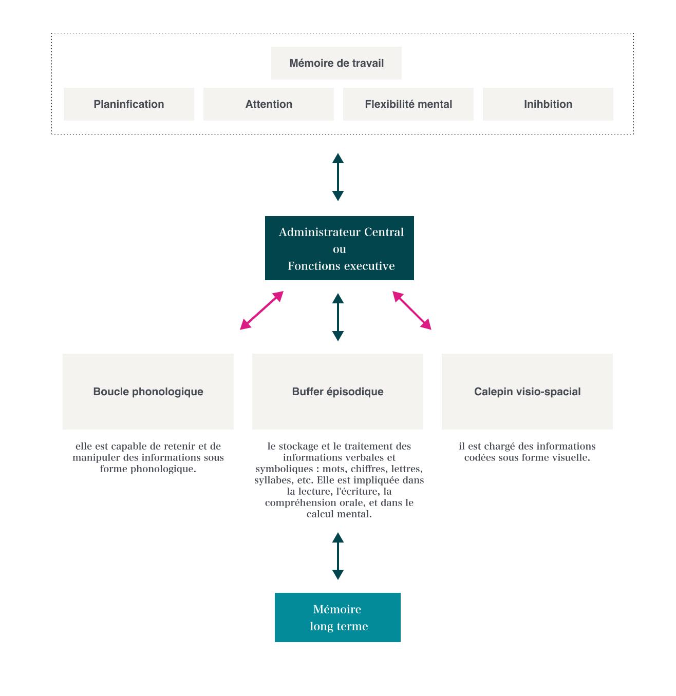 mémoire de travail psychologie cognitive-v1